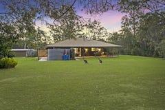 Wallabys im australischen Landleben Lizenzfreie Stockfotos