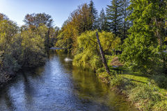 Wallace River. Trout splashing in the Wallace river, Washington Royalty Free Stock Photo