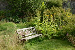 Walled garden, Applecross. A wooden garden becnh at the walled garden, Applecross, Scotland Royalty Free Stock Photography