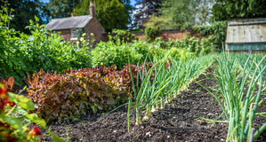 Walled Vegetable Garden Royalty Free Stock Image