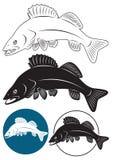 Walleye ψαριών Στοκ φωτογραφίες με δικαίωμα ελεύθερης χρήσης