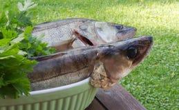2 walleye на таблице Стоковая Фотография
