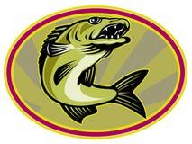 walleye рыб скача Стоковое Фото