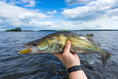 Walleye boat fishing Royalty Free Stock Photo