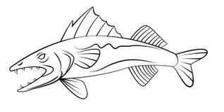 WallEye Fish Royalty Free Stock Photo