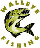 Walleye fish fishing Stock Image