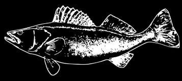 Walleye fish fishing illustration on white background royalty free illustration