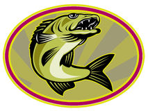 Walleye fish jumping Stock Photo