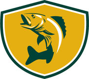 Walleye Fish Jumping Crest Retro. Illustration of a Walleye (Sander vitreus, formerly Stizostedion vitreum), a freshwater perciform fish jumping up  viewed from Royalty Free Stock Photography