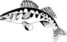 Walleye Outline Royalty Free Stock Image