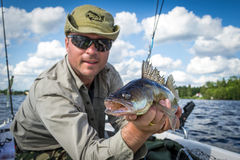 Walleye summer fishing. Happy male angler with summer walleye fishing trophy Royalty Free Stock Images