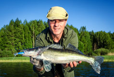 Walleye summer fishing in Scandinavia Royalty Free Stock Images