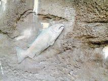 Wallfish Fotografía de archivo libre de regalías