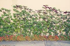 Wallflower tło Fotografia Royalty Free
