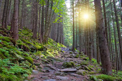 Wallking path in forest Stock Photography