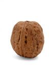Wallnut Stock Image