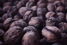 Wallnut 免版税图库摄影