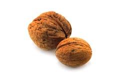 Wallnut Stock Image