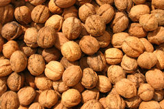 Wallnut background. Closeup texture of pile of wallnuts royalty free stock photos