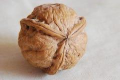 Wallnut con la simmetria unica fotografia stock