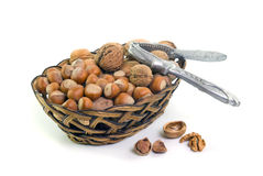Wallnut and hazelnut Royalty Free Stock Image