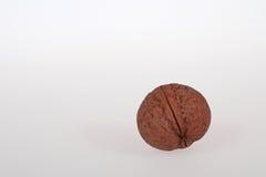 Wallnut op witte achtergrond Stock Foto's