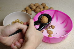Wallnut shelling Royalty Free Stock Photo