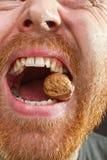 Wallnut in teeth Stock Photo