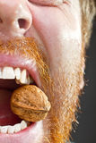 Wallnut in teeth Stock Photos
