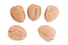 Wallnuts Royalty Free Stock Image