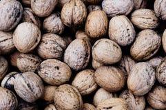 Wallnuts 图库摄影