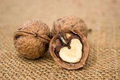 Wallnuts close-up Stock Photo