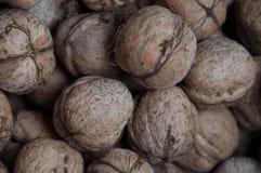 Wallnuts Stock Photo