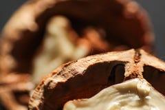 Wallnuts-Makroschüsse stockfoto
