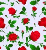 wallpap шикарной флористической розы картины безшовное Стоковая Фотография