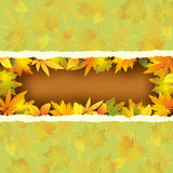Wallpaper background with autumn leaves Royalty Free Stock Photography