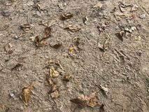 Sand leaves beach brown view background autumn royalty free stock image