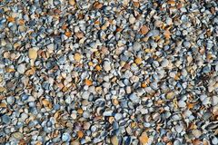 Wallpaper. Background with colored shells royalty free stock image