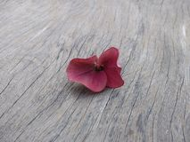 Flowers withered on the wooden floor. Wallpaper background wood flowers withered wooden floor stock image