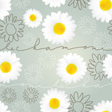 Wallpaper with Chamomile Royalty Free Stock Image