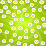 Wallpaper design with daisies Stock Photos