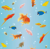 Wallpaper with fish. Vector wallpaper with aquarium fish Stock Photography
