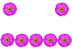 Wallpaper flower Royalty Free Stock Photo