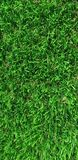 Green grass. Wallpaper green grass nature background stock images