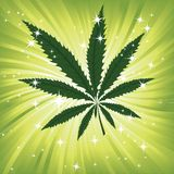 Wallpaper with green leavs of cannabis Royalty Free Stock Photo