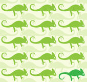 Wallpaper images of chameleon. Illustrations Royalty Free Stock Image