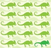 Wallpaper images of chameleon Royalty Free Stock Image
