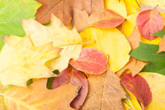 Wallpaper made of dry autumn or fall leaves Royalty Free Stock Images