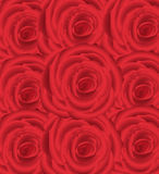 Wallpaper pattern with of red roses Royalty Free Stock Image