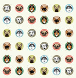 Wallpaper with pets of different breeds Stock Photo